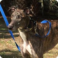 Adopt A Pet :: Zacardi - West Palm Beach, FL
