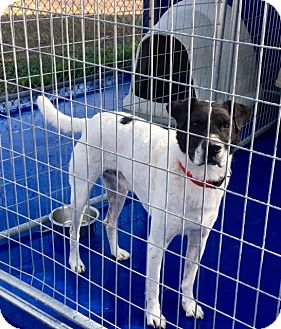 Pointer/English Pointer Mix Dog for adoption in New Kent, Virginia - Mark