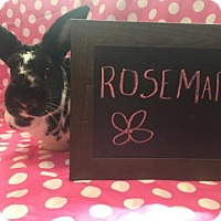 Adopt A Pet :: Rosemary - Columbus, OH