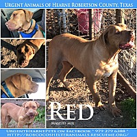 Mastiff/Black Mouth Cur Mix Dog for adoption in Hearne, Texas - Red