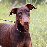Adopt A Pet :: Palma - Fillmore, CA