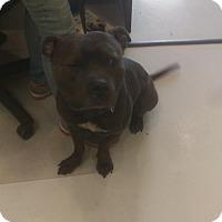 Adopt A Pet :: Geno - Mt. Gilead, OH