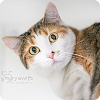 Adopt A Pet :: Layla - Reisterstown, MD