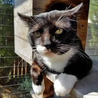 Adopt A Pet :: Humpty - Noblesville, IN