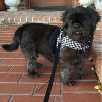 Adopt A Pet :: Mandi - Seagoville, TX