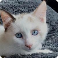 Adopt A Pet :: Luna - Monroe, GA