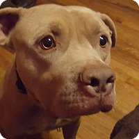 Adopt A Pet :: Nacho - Clarksville, TN