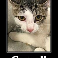 Adopt A Pet :: Carroll - Woodstock, GA