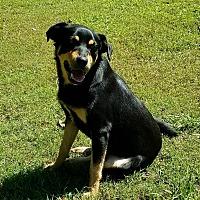 Adopt A Pet :: Diesel - Brattleboro, VT