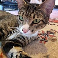 Adopt A Pet :: Sanna - Santa Fe, NM