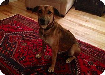Shepherd (Unknown Type) Mix Dog for adoption in Hamilton, Ontario - Gabby