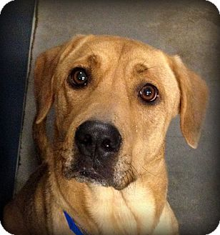 Hound (Unknown Type) Mix Dog for adoption in Fort Worth, Texas - Bubba