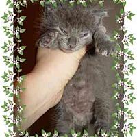 Adopt A Pet :: Jeffrey & Joey - KANSAS, MO