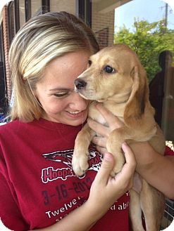 Beagle Mix Puppy for adoption in Columbia, South Carolina - Sandy