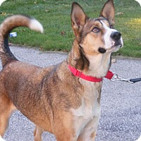 Adopt A Pet :: Tally - Toledo, OH