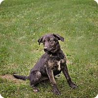 Adopt A Pet :: Skipper and Gilligan - Lewisville, IN