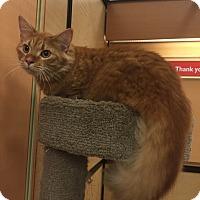 Adopt A Pet :: Toby - Monroe, GA