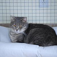 Adopt A Pet :: Betsy - Trevose, PA