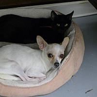 Adopt A Pet :: Momma - Casa Grande, AZ