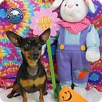 Adopt A Pet :: Tommy - Arcadia, FL