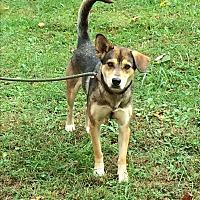 Adopt A Pet :: Kai - Ona, WV