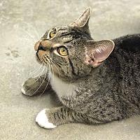 Adopt A Pet :: Eendy - Simpsonville, SC