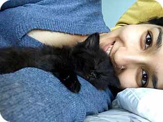 Domestic Longhair Kitten for adoption in Highland Park, New Jersey - Bat Lady