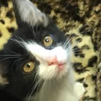 Adopt A Pet :: Lucy - Bastrop, TX