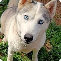 Adopt A Pet :: Maise - Youngsville, NC