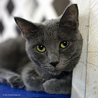 Adopt A Pet :: Tansy - Tucson, AZ