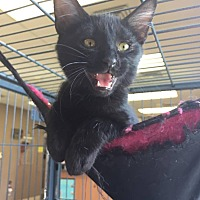Adopt A Pet :: Biscuit - Moody, AL