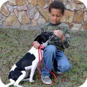 Border Collie/American Eskimo Dog Mix Dog for adoption in Weeki Wachee, Florida - Lynda