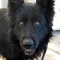 Adopt A Pet :: Vinny - Oakley, CA
