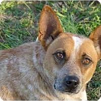 Adopt A Pet :: Aidan - Siler City, NC