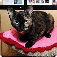 Adopt A Pet :: Gabby - Farmingdale, NY