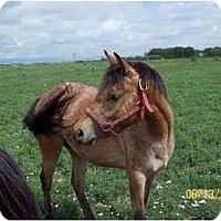 Adopt A Pet :: Scooter - Pueblo, CO