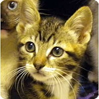 Adopt A Pet :: Cherise - Encinitas, CA