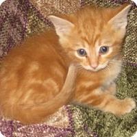 Adopt A Pet :: Coover - Dallas, TX