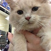 Adopt A Pet :: Alexander - Pittstown, NJ
