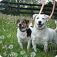 Adopt A Pet :: Indiana - Rhinebeck, NY