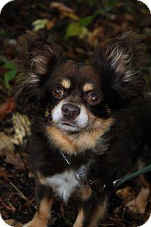 Chihuahua Mix Dog for adoption in Waldorf, Maryland - Oscar