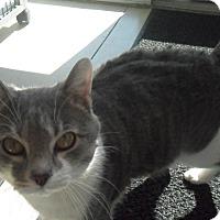 Adopt A Pet :: Tom - white settlment, TX