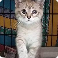 Adopt A Pet :: Tausha - Columbus, OH