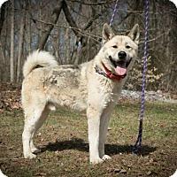 Adopt A Pet :: Yoshi - Toms River, NJ