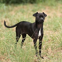 Adopt A Pet :: MANNY - San Antonio, TX