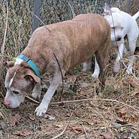 Adopt A Pet :: Buster - 15 - Wapwallopen, PA