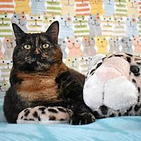 Adopt A Pet :: Vera - Pine Bush, NY