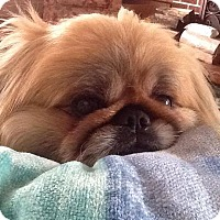 Adopt A Pet :: Timothy/Mugsie - Richmond, VA