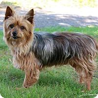 Adopt A Pet :: Max - Bedford, VA