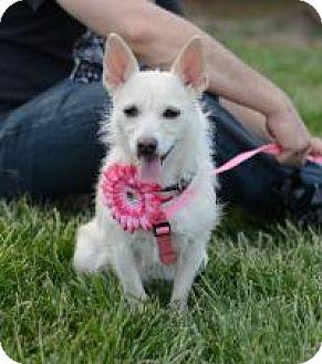 Terrier (Unknown Type, Medium) Mix Dog for adoption in Matthews, North Carolina - Suki
